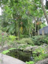 Pond and bamboo trees at Orchid World Barbados.jpg