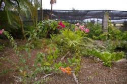 Tropical plants with red pink and orange flowers at Orchid World Barbados.jpg