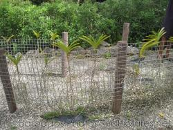 Plants behind fence at Orchid World in Barbados.jpg
