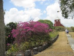 Gun Hill Signal Station and pink flowers in Barbados.jpg